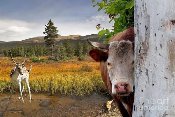 Liane Photograph - Landscape - Animals - Peek A Boo Cow by Liane Wright