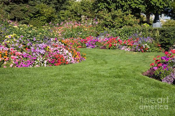 Photograph - Landscape Garden by Cindy Singleton