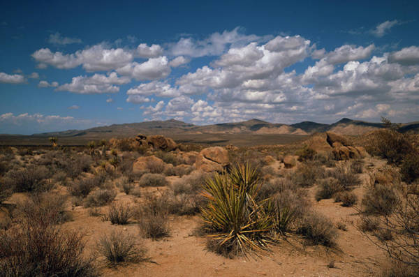 Mojave Photograph - Landscape Of The Mojave Desert by Tony Craddock/science Photo Library
