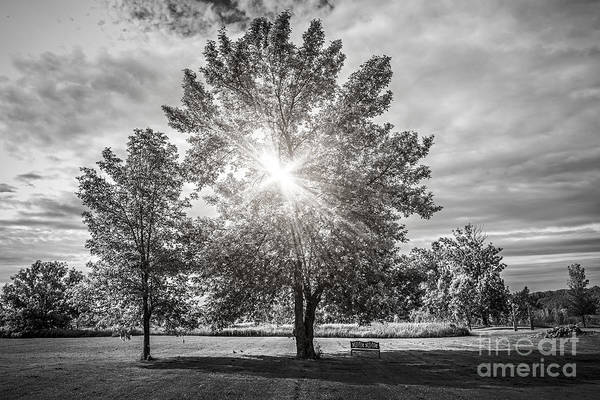 Wall Art - Photograph - Landscape With Sun Shining Though Trees by Elena Elisseeva
