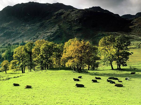 Milk Farm Photograph - Langdale by Kodachrome25