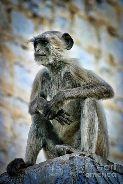 Northern India Photograph - Langur On A Wall In Rajasthan 2 by Henry Kowalski