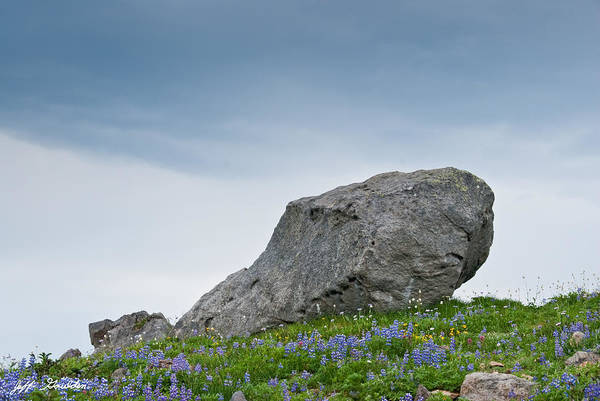 Glacial Erratic Photograph - Large Boulder Deposited By A Glacier In An Alpine Meadow by Jeff Goulden