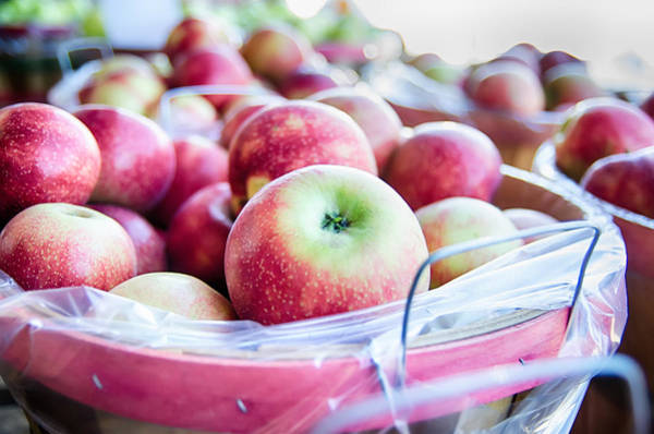 Photograph - Large Bushel Basket Full Of Fresh Locally Grown Red Apples At Lo by Alex Grichenko