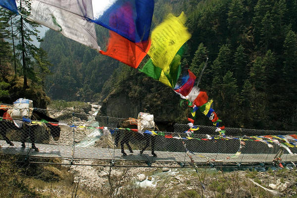 Khumbu Wall Art - Photograph - Larja Bridge, Khumbu, Nepal by David Noyes