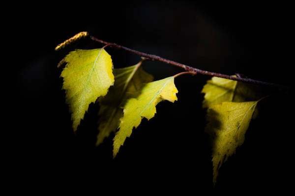 Photograph - Last Autumn Gifts by Michael Goyberg