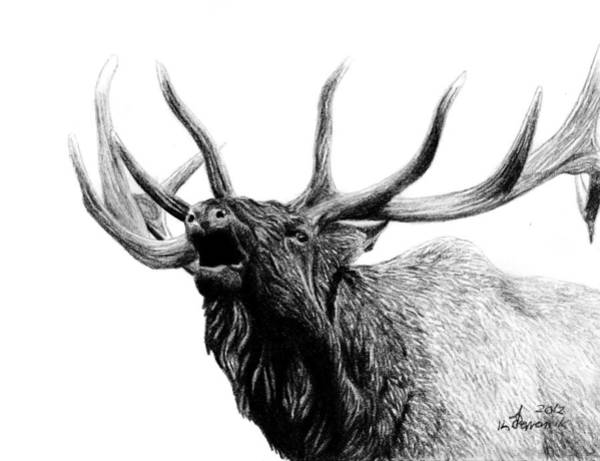 Antlers Drawing - Last Cry by Kayleigh Semeniuk