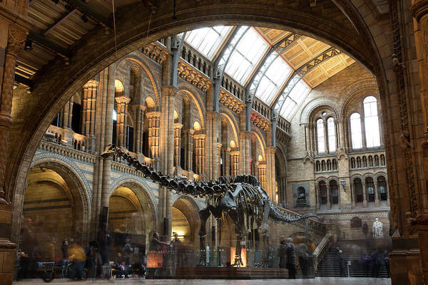 Photograph - Last Day At The Museum For Dippy The by Dan Kitwood