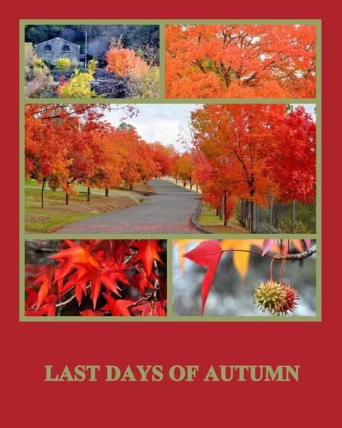 Photograph - Last Days Of Autumn by AJ  Schibig