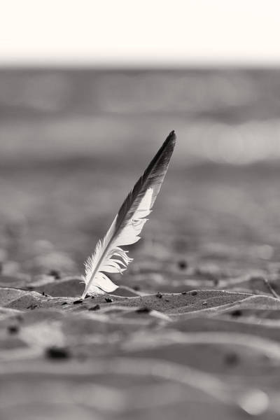 Photograph - Last Days Of Summer In Black And White by Sebastian Musial