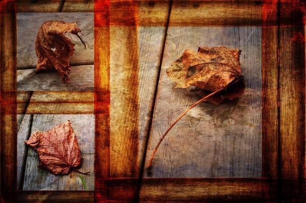 Photograph - Last Days by Randi Grace Nilsberg