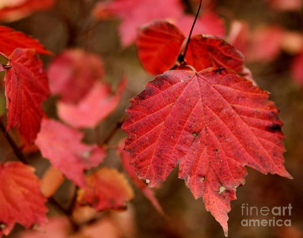 Last Fall Colors Art Print