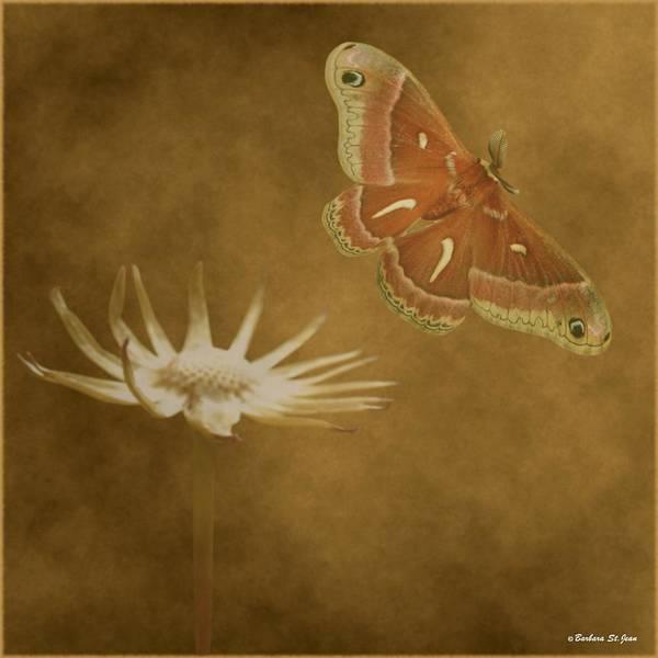 Mixed Media - Last Flight by Barbara St Jean