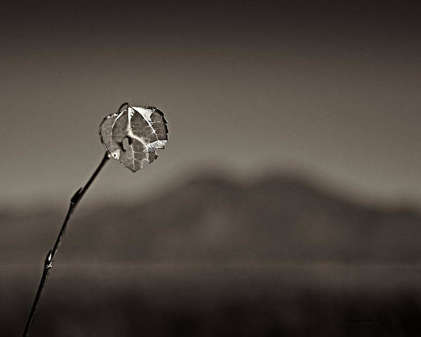 Photograph - Last Leaf by Charles Muhle