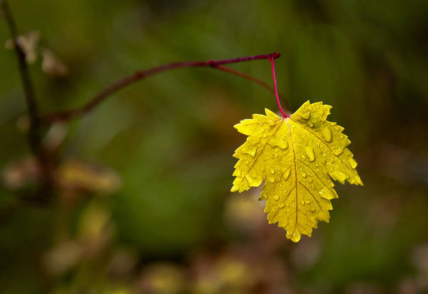 Photograph - Last Leaf by Mary Jo Allen