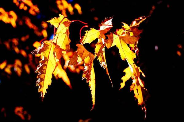 Photograph - Last Leaves Of Summer by David Matthews