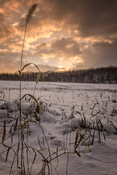Photograph - Last Light Across A Winter Field by Chris Bordeleau