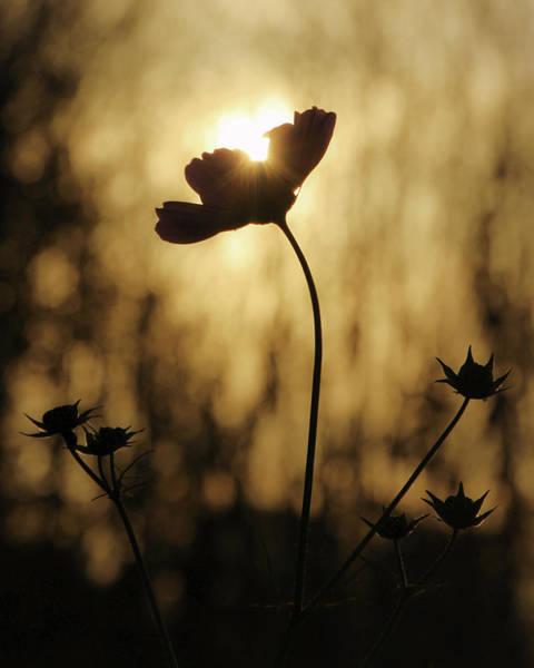 Photograph - Last Light by David Hufstader