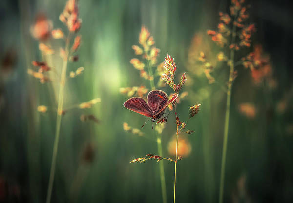 Macro Photograph - Last Light by Florentin Vinogradof