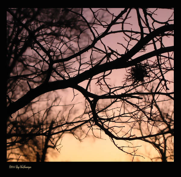 Photograph - Last Light by Lucy VanSwearingen