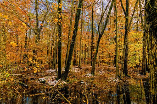 Photograph - Last Of Autumns Color by Louis Dallara