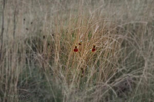 Photograph - Last Petals by Paulette B Wright