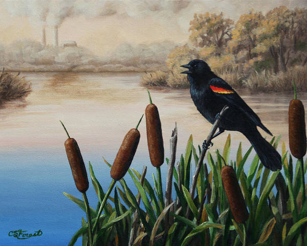 Red-winged Blackbird Wall Art - Painting - Last Song by Crista Forest