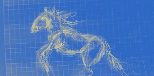 Liechtenstein Digital Art - Last Wild Horse In Europe A Sorraia by Carolina Liechtenstein