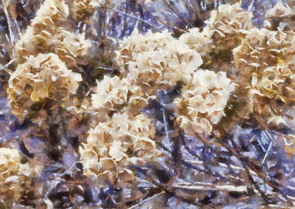 Photograph - Last Year's Hydrangeas by Gerry Bates
