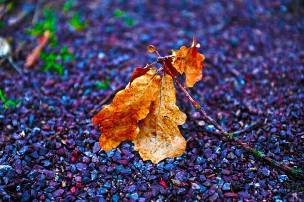 Photograph - Lasting Colors by Randi Grace Nilsberg