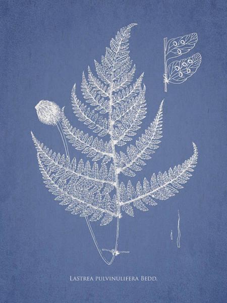 Ferns Digital Art - Lastrea Pulvinulifera by Aged Pixel
