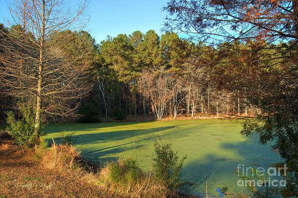 Photograph - Late Afternoon Long Shadows by Paulette B Wright