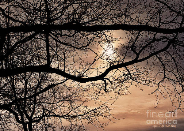 Photograph - Late Afternoon On A Day In December by Gerlinde Keating - Galleria GK Keating Associates Inc