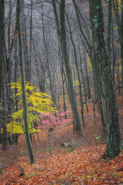 Photograph - Late Autumn Forest by Bill Wakeley