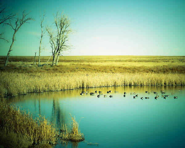 Duck Hunt Photograph - Late Day Ducks by Marilyn Hunt