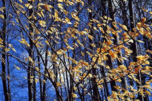 Late Autumn Wall Art - Photograph - Late Fall by Elena Elisseeva