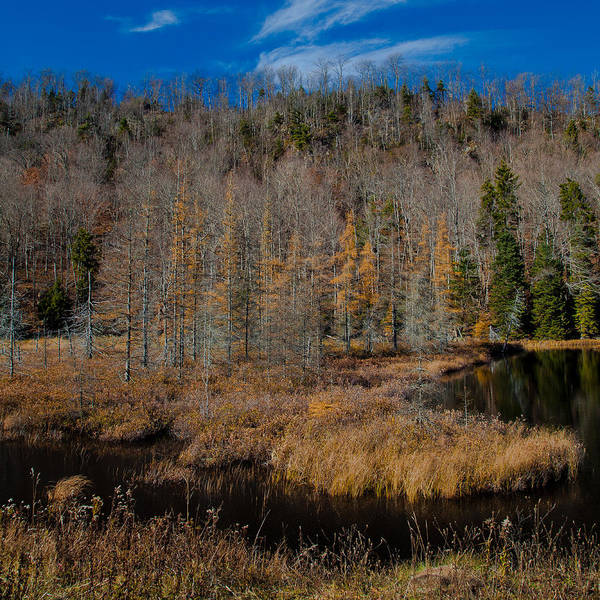 Photograph - Late Fall On The South Shore Of Bald Mountain Pond by David Patterson