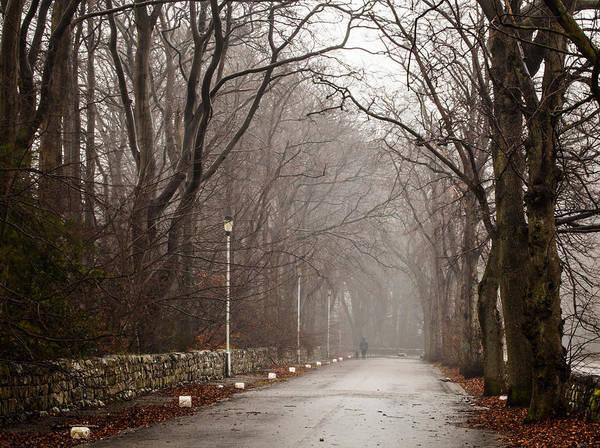Photograph - Late Fall Walk by Brian Grzelewski