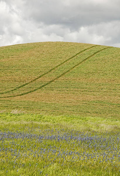 Wall Art - Photograph - Late Spring Tracks by Latah Trail Foundation