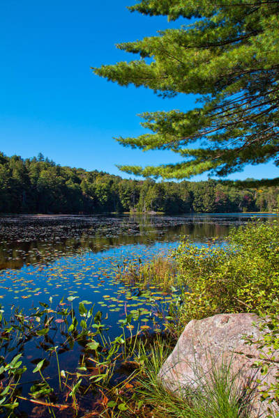 Photograph - Late Summer On Cary Lake by David Patterson
