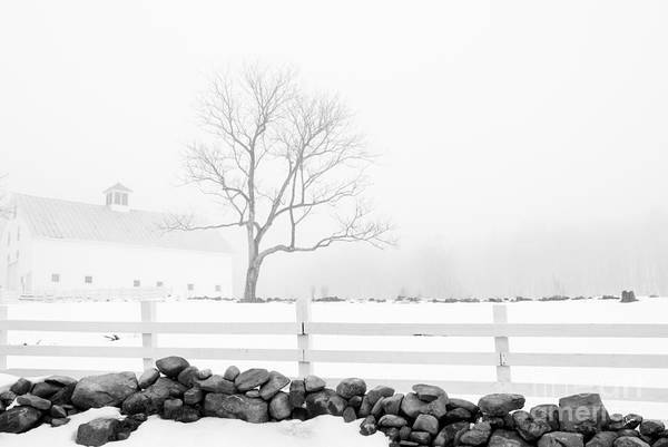 Photograph - Late Winter by Alana Ranney