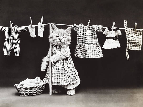 Kitties Photograph - Laundry Day by Aged Pixel