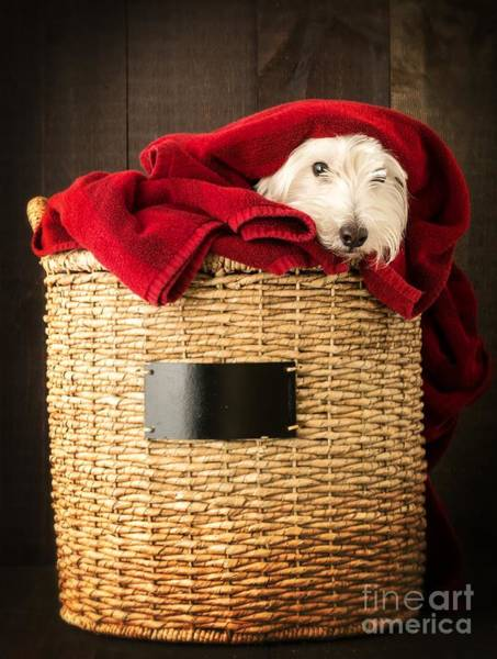 Red Dog Photograph - Laundry Day by Edward Fielding