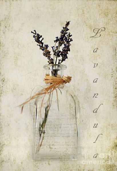 Fragrance Photograph - Lavandula / Lavender by Darren Fisher