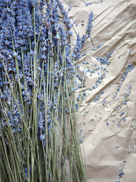 Wall Art - Photograph - Lavender And Buds by Rebecca Cozart