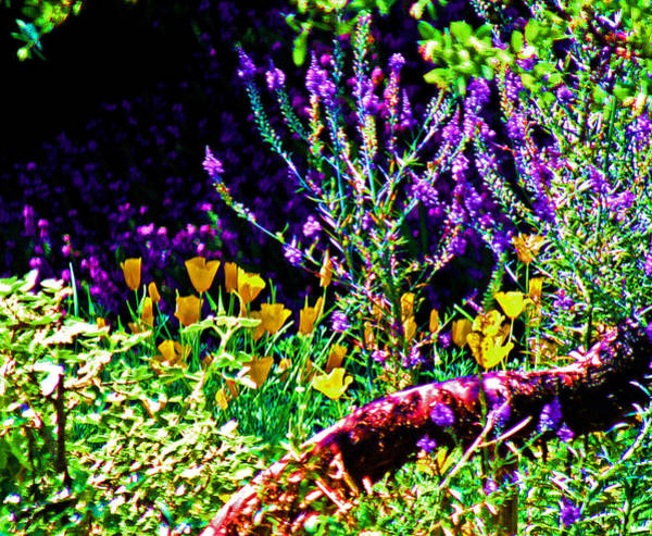 Wild Poppies Digital Art - Lavender And Gold by Joseph Coulombe
