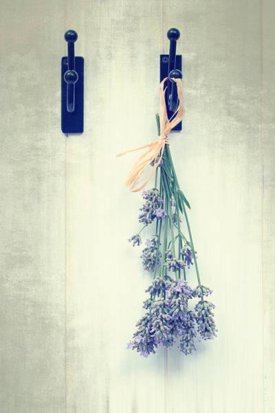 Lavender Photograph - Lavender by Amanda Elwell