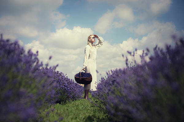 Growing Photograph - Lavender Field by Dorota G?recka