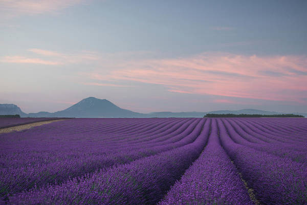 Lavender Wall Art - Photograph - Lavender Field by Rostovskiy Anton