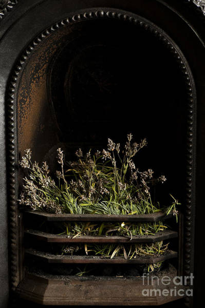 Fire Place Photograph - Lavender Fire by Anne Gilbert